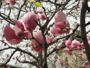 florii-2014-la-brasov-coroana-brasovului