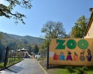 zoo-brasov_10