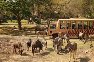 autobuz safari virtual VR zoo brasov