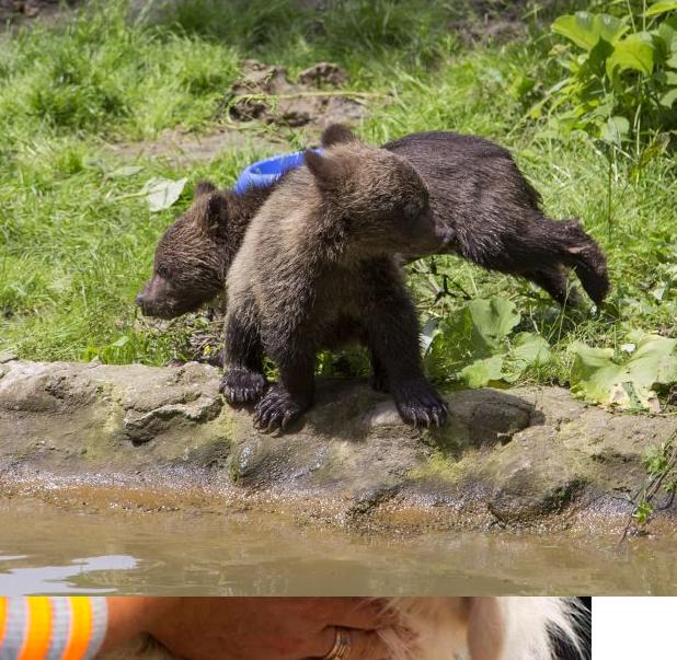 Sanctuarul de ursi de la Zarnesti